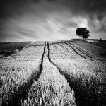 In The Fields IV by EmilStojek