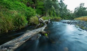 Paterson River, Lostock Dam by andrewbg