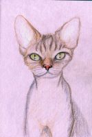 Pink cat by w176