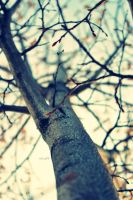 I want to be a tree III by vival9