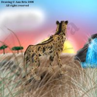 King cheetah by ziba