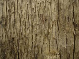 Tree texture - 11 by LunaNYXstock
