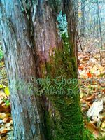 The Moss Blanket by LiveInAMoment