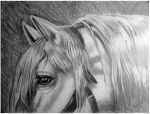 White Pony by vdoinart