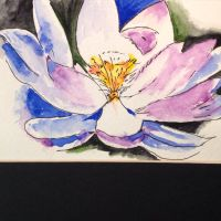 Lotus Flower by ambellone