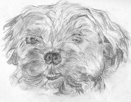 drawing fluffy the dog by brusho