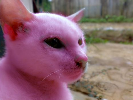 Madonna the PINK cat by alekzis