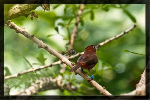 Another bird by deaconfrost78