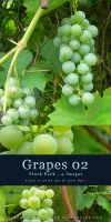 Grapes 02 - Stock Pack by kuschelirmel-stock