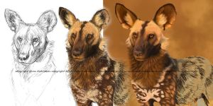 African Wilddog step-by-step digital painting by Midnight-Sun-Art