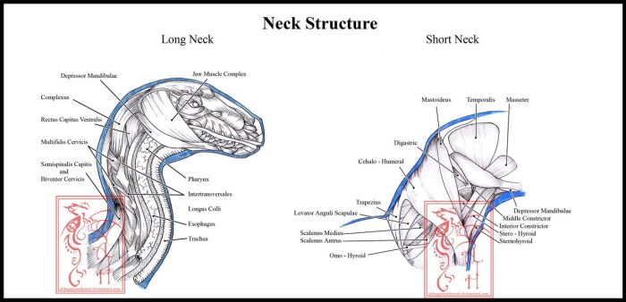 Dragon Neck Musculature by ObloquyCondemed