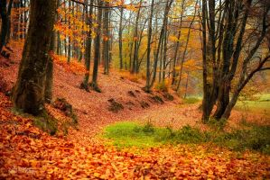 Picture of Fall by valiunic