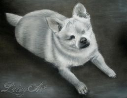 Miki the Special Needs Chihuahua - Charcoal by secrets-of-the-pen