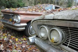 Sixties in leaves by finhead4ever