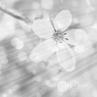 Mist of Spring by WhiteBook