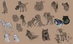 Sketches - Canine / Characters by Autlaw