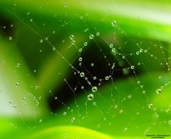 Dew Drops On Spider Web by lindahabiba