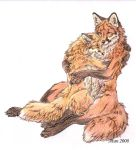 Red foxes by Atan