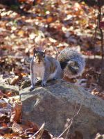 Squirrel: Model Pose 1 by ElizabethWillett