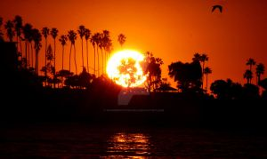 Fiery Sunset Behind Palm Trees by warpedphotography