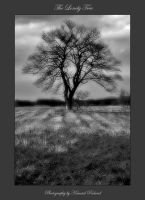 The Lonely Tree by zozzy1980