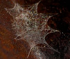 web-a-licious... by shotsfiredimagedown