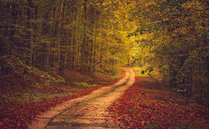 Autumn Road by ferrohanc