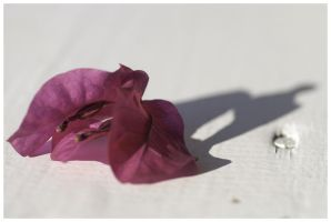 Shadow of the Flower by sudd