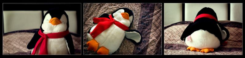 My Penguin by activeflush