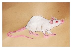 Rat_White_1 by Duffzilla
