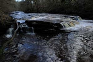 Mouse Cascade by WestLothian