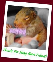 Squirrel in Cast by ScoapEyes