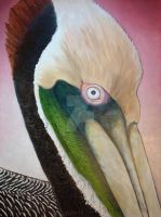 Pelican...Peeking by scott-plaster