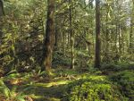 Trans Canada Trail~3/27/2015~6 by Mathayis