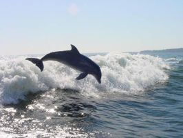 Dolphin Jumping by AngeLinTheFire27