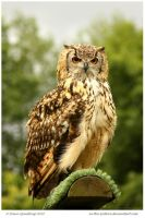 Eagle Owl by In-the-picture