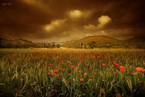 Copper Fields by jadden