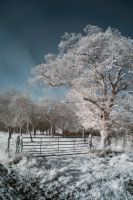 Orchard Infrared by Dave-Ellis