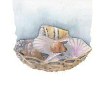 Conchiglie nella cesta - shells in a basket by hanestetico