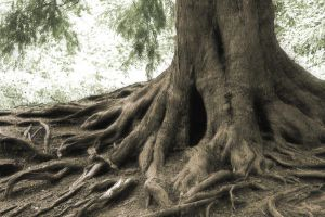 tree roots HD by pmattiasp