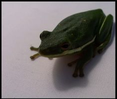 Green frog by mysticblue133