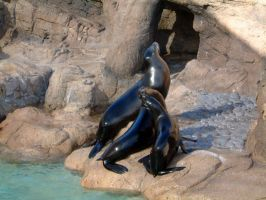 EMO: Seals by askewlemming