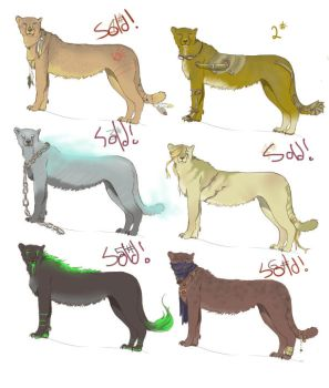 Adoptables Cheetahs -OPEN- by lionheartfreedom