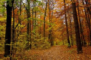 Fall Forest 4900198 by StockProject1
