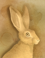 A Coffee Stained Hare by The-Hare