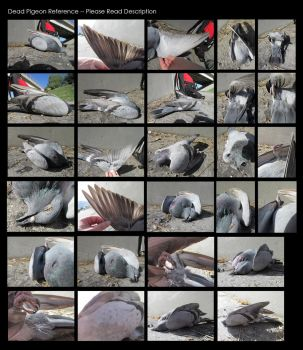 Dead Pigeon Stock and Reference by Oddstuffs