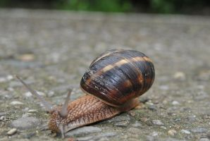 lonely snail by FillyDan