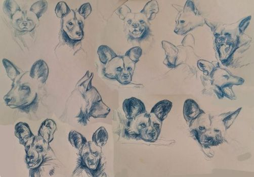 Painted Dog studies by Actonart