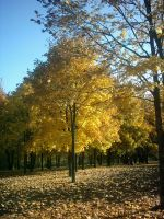 The Autumn Gold 11 by faelivrinen-stock