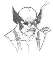 Wolverine SKETCH 2012 III by LucasAckerman